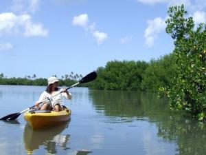 mangrove-kayaks2_www.viequesadventures.com