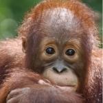 orangutan_58-web-2