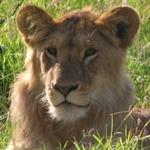 Elevate Desintaions-lion2