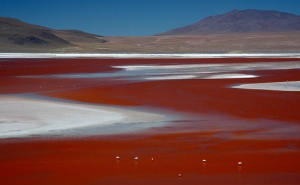 Laguna Colorada-BOLIVIA-www.wayfaring.com-2159312742_c4d6bb7540