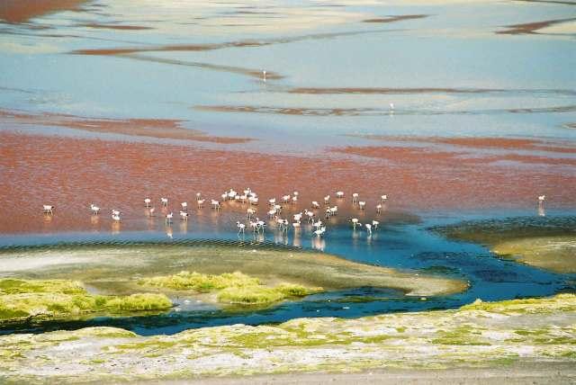 Laguna Colorada-BOLIVIA-www.wayfaring.com-laguna-colorada-and-some-flamingos