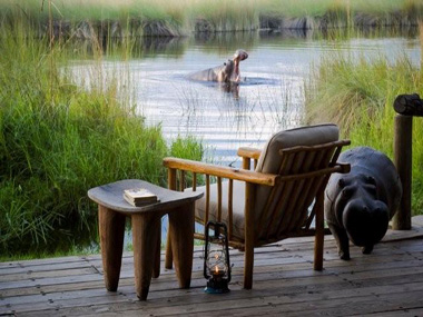 An intriguing guest at Xakanaxa Camp, Moremi Game Reserve, Botswana.