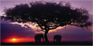 Okavango Delta-AFRICA-www.wayfaring.com-botswana