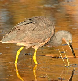 Okavango Delta-AFRICA-www.wayfaring.com-egret