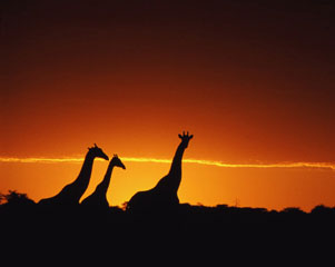 Okavango Delta-AFRICA-www.wayfaring.com-sunset-2