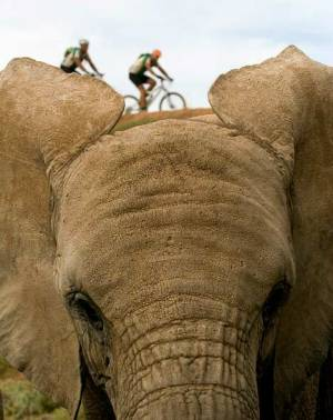 endangered-species-bike2