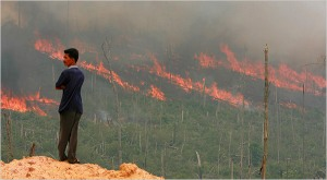 2006 forest fire in Pelalawan, Riau Province, Indonesia. Photo: Bea Wiharta for Reuters