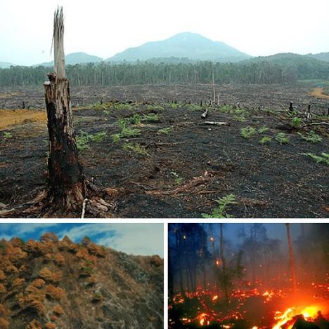 Indonesia's Fire Hazard-www.webecoist.com