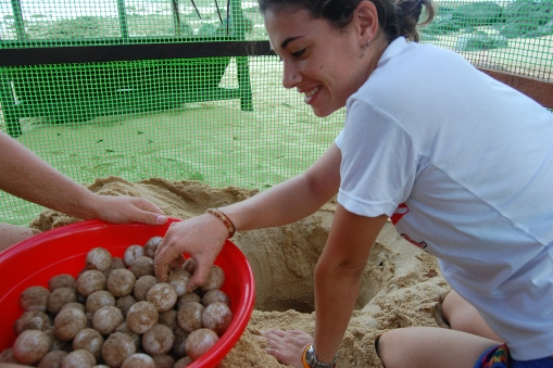 Burying the eggs. Photo: Eco Field Trips