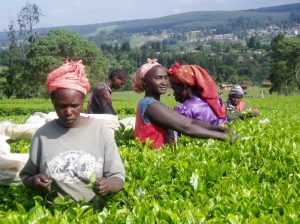 Rainforest Alliance-kericho-workers-rainforest-alliance