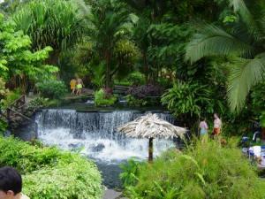 Rainforest Alliance-tabacon