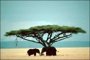 tanzania-east-africa