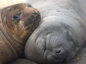 Baby Seal and Mother-photo www.igougo.com