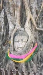 Banyan Tree-overtaking Buddha head statue at Angkor Wat-Cambodia 1
