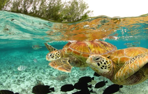 World Animal Day-Green Sea Turtle