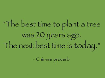 Quote_Chinese-Proverb_The-best-time-to-plant-a-tree-was-20-years-ago.-The-next-best-time-is-today_1